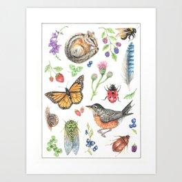 Flora and Fauna of Summer Art Print