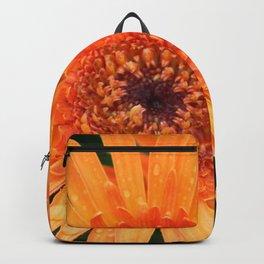 Orange Gerber Daisy after the Rain Backpack
