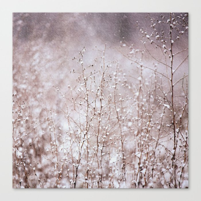 Snowy branches in the rain Canvas Print