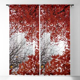Red maple #2 Blackout Curtain