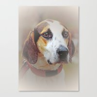 the hound Canvas Prints featuring Hound dog by Doug McRae