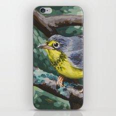 Canada Warbler iPhone & iPod Skin