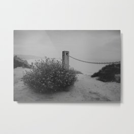 Cliffside daises Metal Print