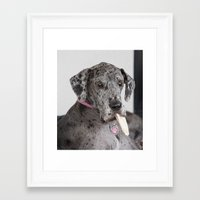 great dane Framed Art Prints featuring Great Dane by Deborah Janke