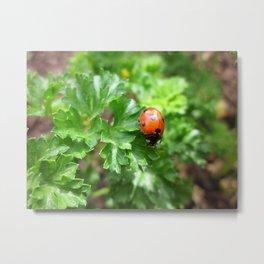 ladybug Metal Print