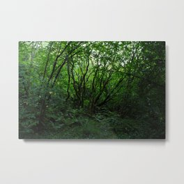 Old Growth Forest Metal Print