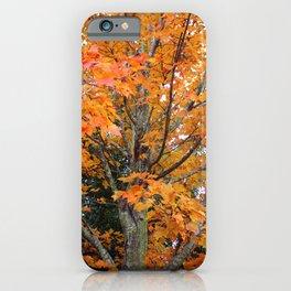 Sugar Maple Tree iPhone Case