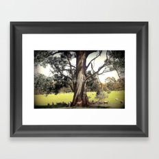 Under the shade of a Coolabah Tree Framed Art Print