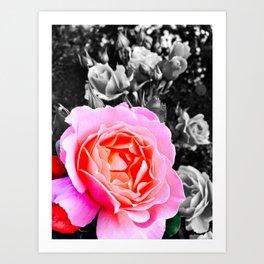Pink, Black and White Art Print