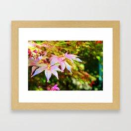 Maroon Leaves - Japanese Maple Framed Art Print