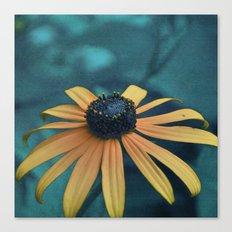 Black-eyed Susan Canvas Print