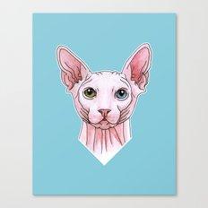 Sphynx cat portrait Canvas Print