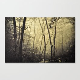 Mysterious forest. Canvas Print