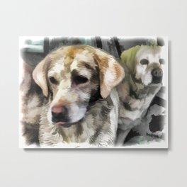Labradors fun in the mud Metal Print