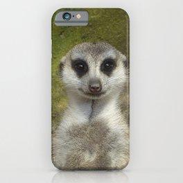 Funny Meerkat iPhone Case