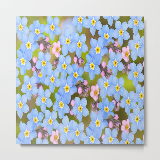 Forget-me-not flowers and buds - summer meadow Metal Print