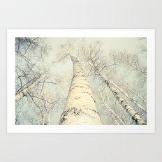birch trees 2 Art Print