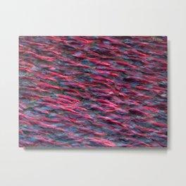 Kokanee Salmon in Spawning Colours Metal Print