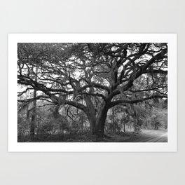 Black and White Mossy Oak Art Print