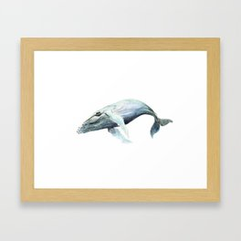 Humpback 2012 Framed Art Print