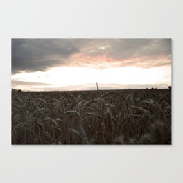 Ready for Harvest. Canvas Print