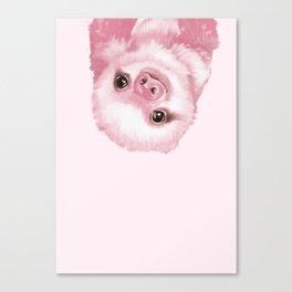 Baby Sloth Pink Canvas Print
