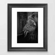 Senegal Parrot Framed Art Print