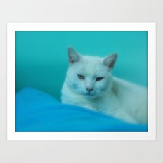 WHITE KITTY CAT IN BLUE AND GREEN Art Print