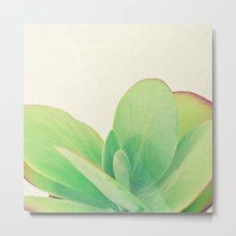 Paddle Plant Metal Print