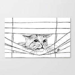 Cat in venitian blind Canvas Print
