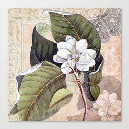 Vintage White Magnolia Canvas Print