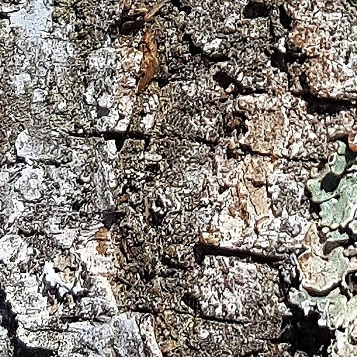 Tree Bark Leggings