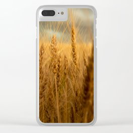Harvest Time - Golden Wheat in Colorado Field Clear iPhone Case