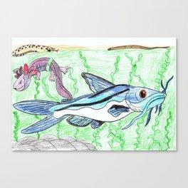 Mexican Blue Catfish Canvas Print