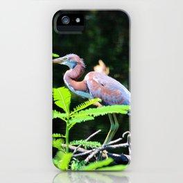 Juvenile Tricolored Heron iPhone Case