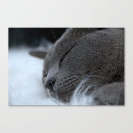 Sleeping Female Burmese Kitten Canvas Print