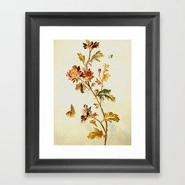 Chrysantheme Framed Art Print
