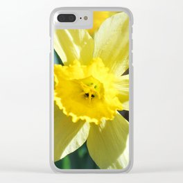 A large yellow flower of narcissus. Clear iPhone Case