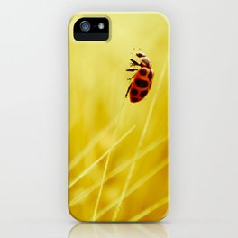 to the wind. iPhone Case