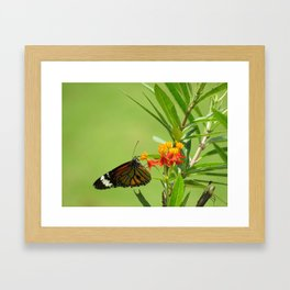 summer in India Framed Art Print