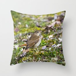 Hermit Thrush Throw Pillow