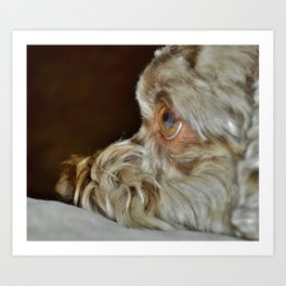 Soulful Eyes Art Print