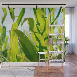 Corn leaves Wall Mural