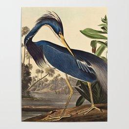 John James Audubon - Louisiana Heron Poster