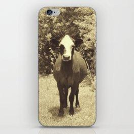 cow in field iPhone Skin
