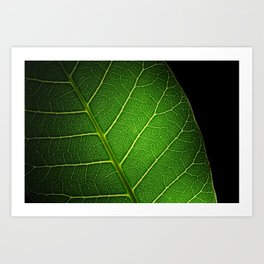 Texture leaf Art Print