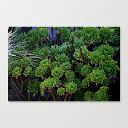 Succulent valley Canvas Print