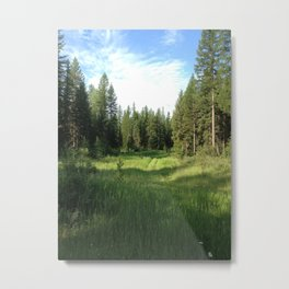 Dickey Lake Meadow - July 2012 Metal Print