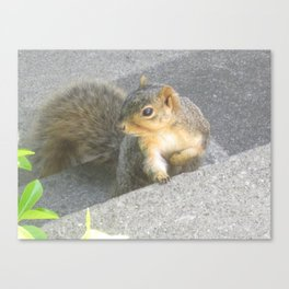 Seeker Of The Nuts Canvas Print