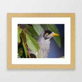 Miner Bird Framed Art Print